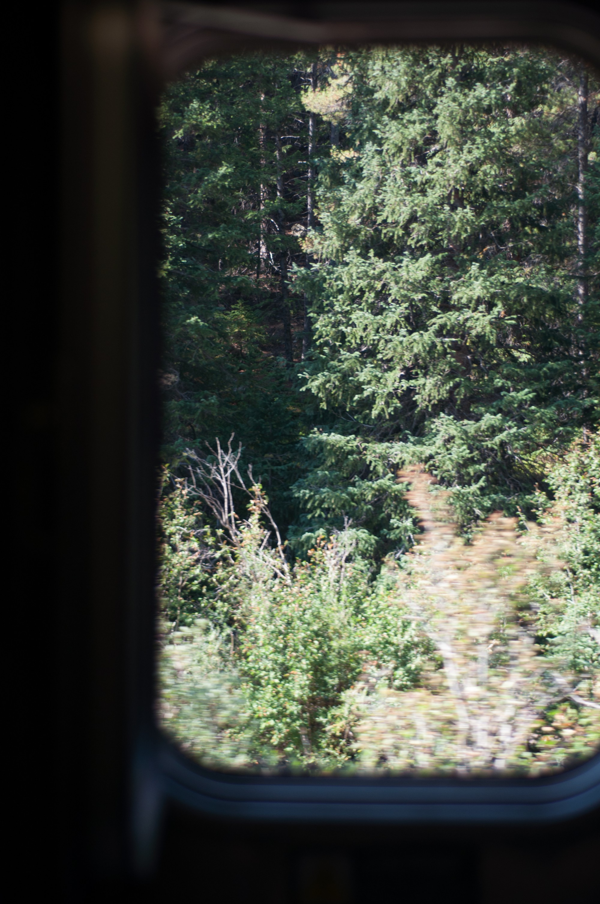Par la fenêtre, les forêts de pin commencent à apparaître
