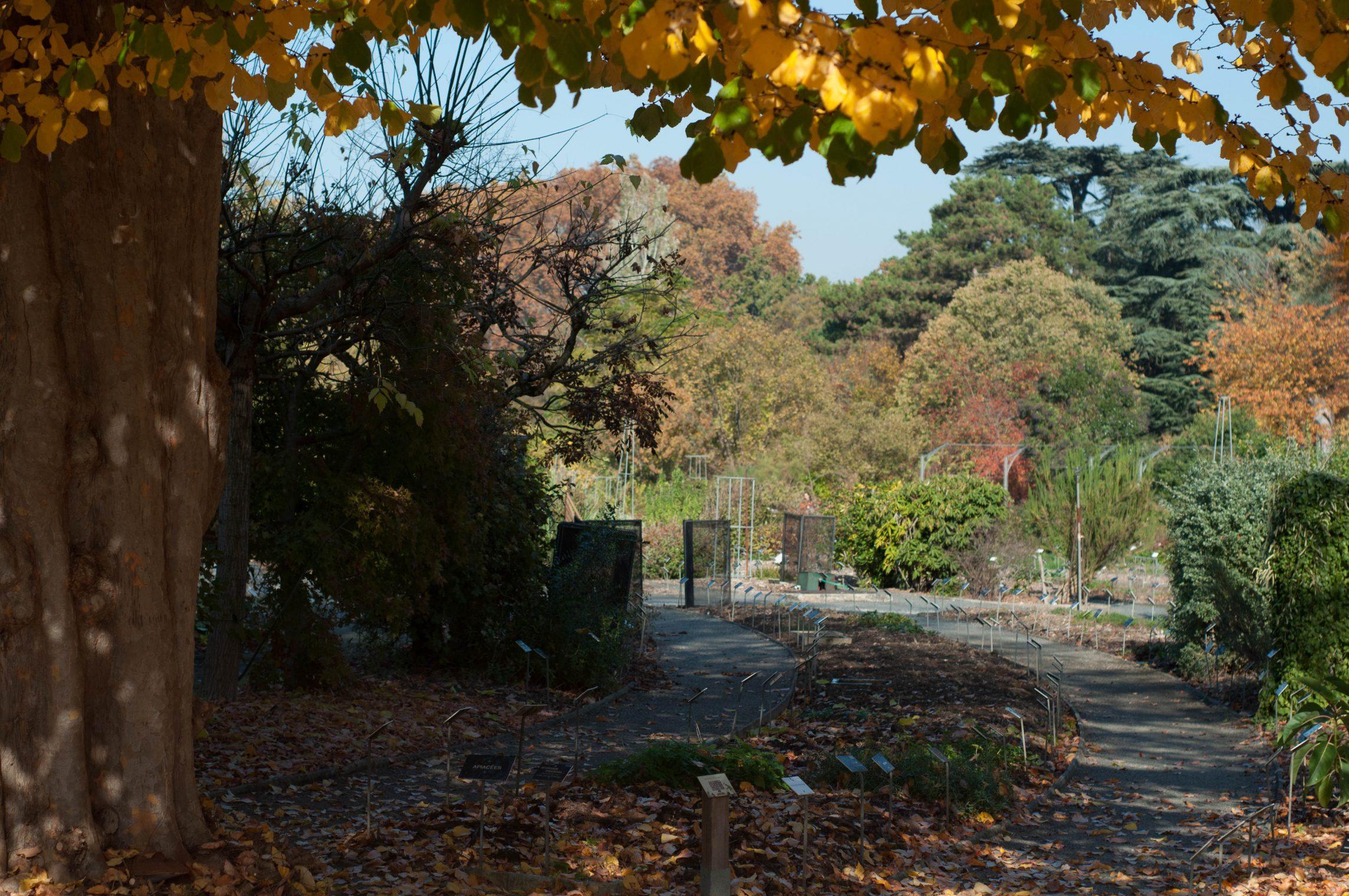 lyon-automne2015-1