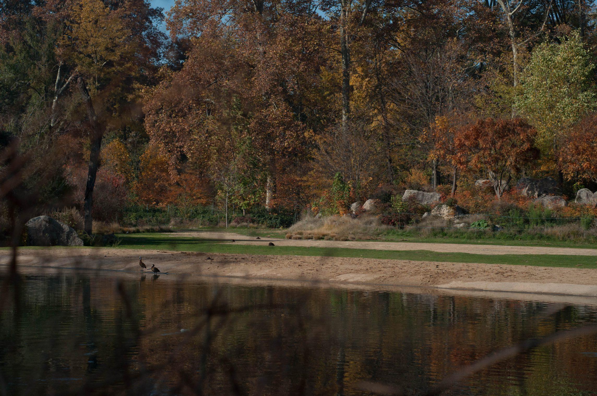 lyon-automne2015-10
