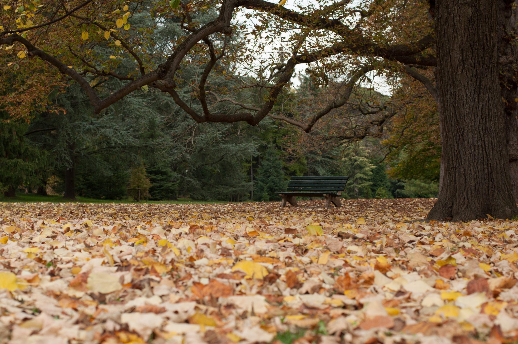 automne2016-lyon-15