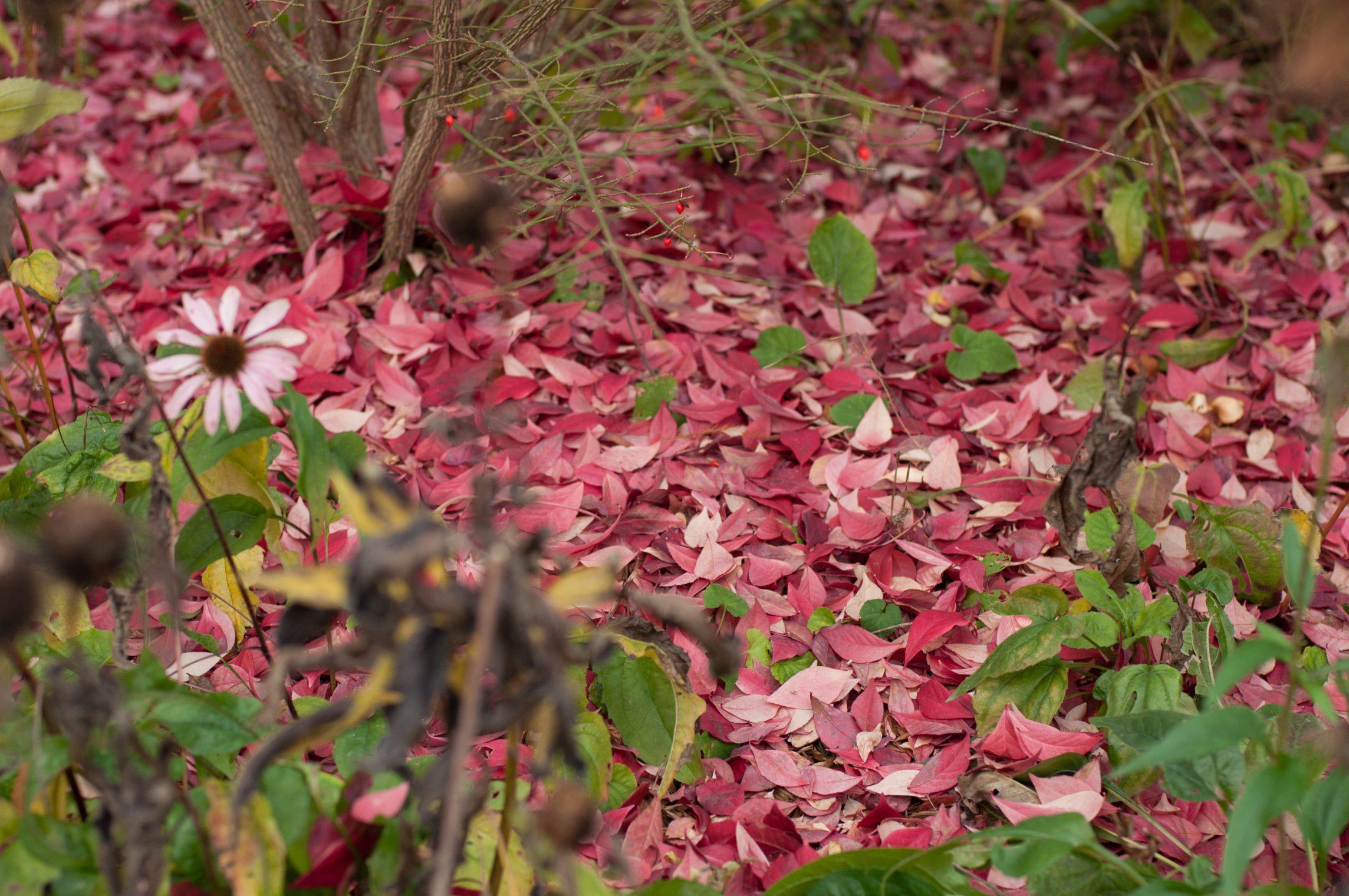 automne2016-lyon-37
