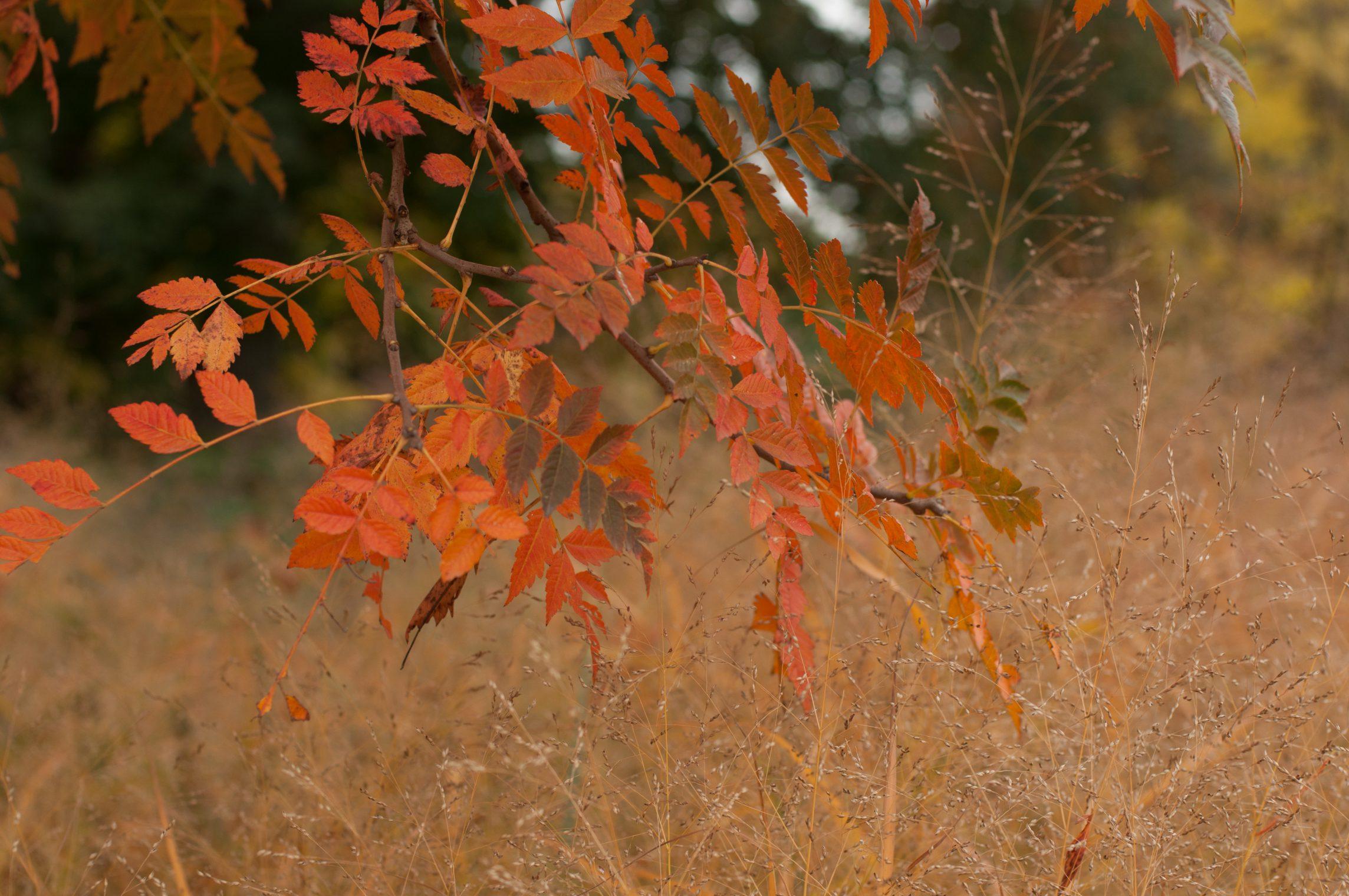 automne2016-lyon-5